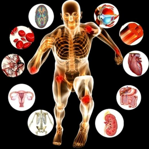 Online Anatomy and Physiology Theory L3/L4