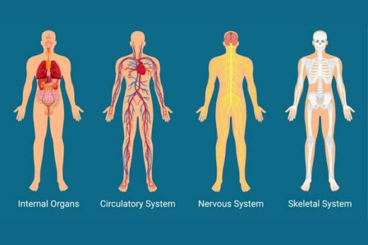 Anatomy and Physiology Course Online